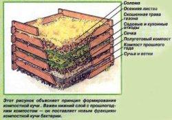 Слово о компосте