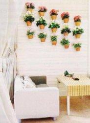 Сила комнатных растений