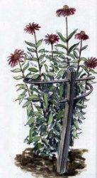 Ограда для растений