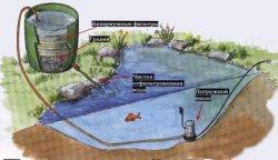 Пруд с чистой водой