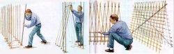 Бамбуковые подпорки для бобовых