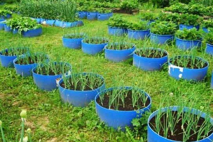 огородные грядки фото