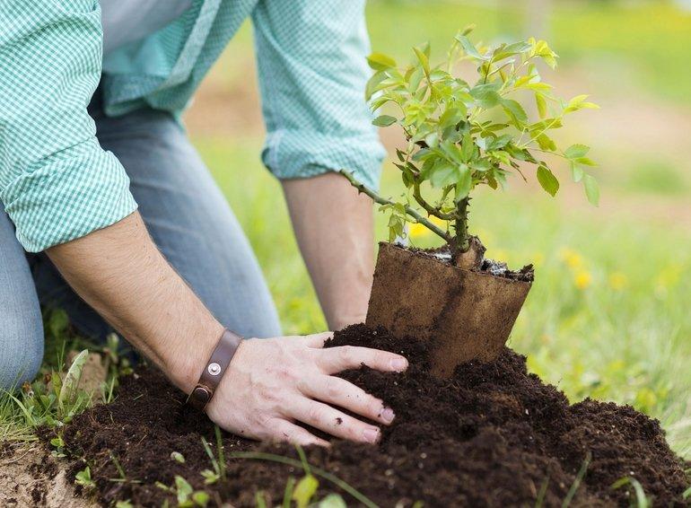 Во сне сажать маленькое дерево 43