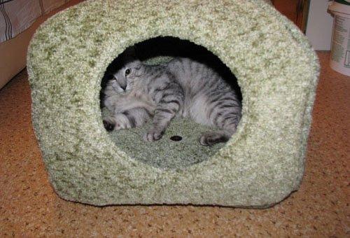 Для котенка спальное место своими руками