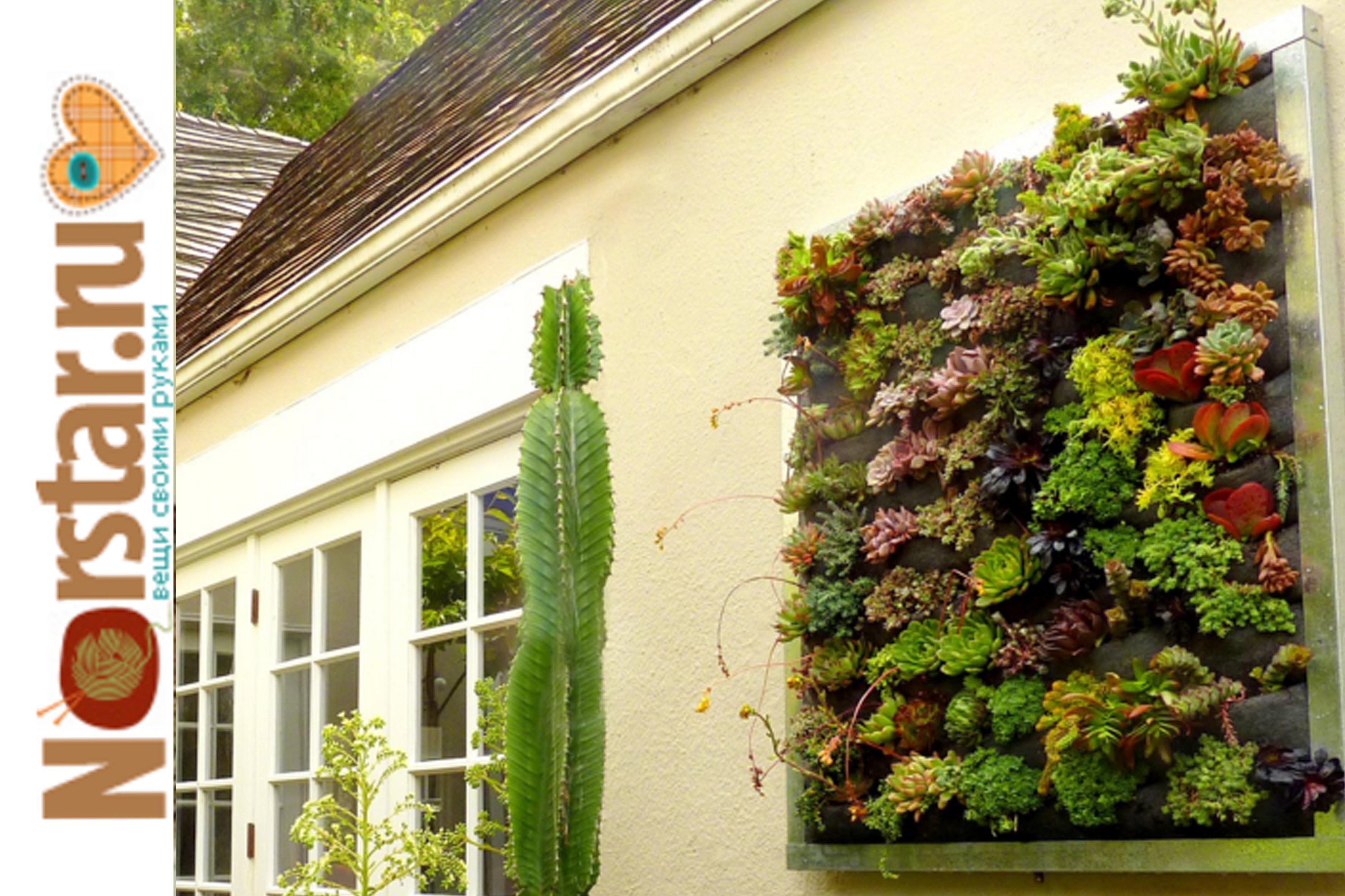 Вертикальное озеленение своими руками.