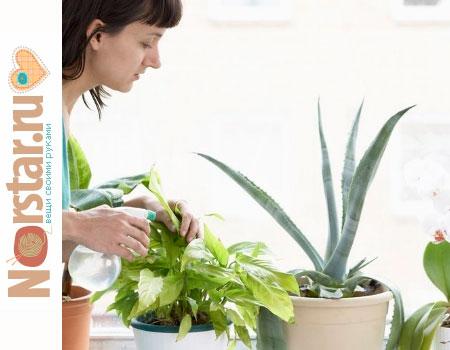 Основные правила по уходу за комнатными растениями