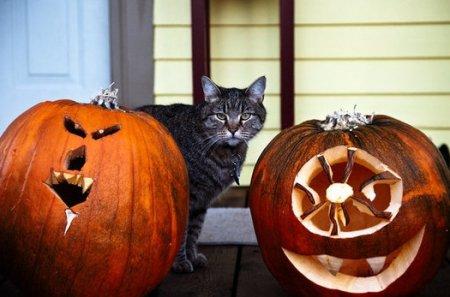 Хэллоуин, не пугающий ваш кошелёк