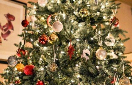 Какую ёлку выбрать на Новый год?