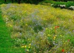 Мавританский газон на садовом участке