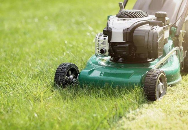 Искусство ухода за газонными травами