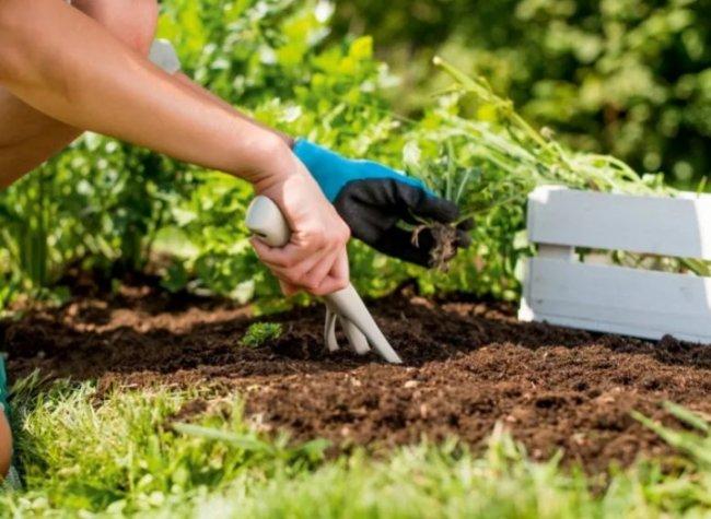 Как осенью улучшить состав почвы и избавиться от сорняков?