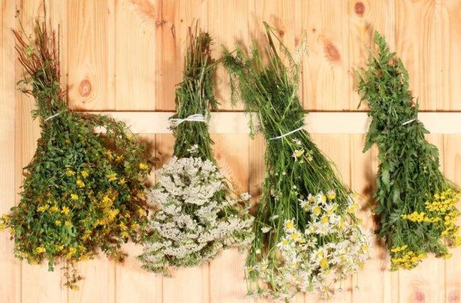 Травы для бани - какие выбрать?